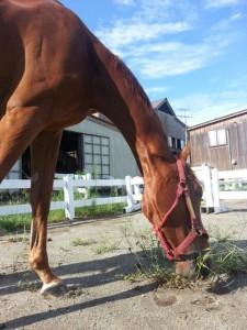 2HP素材乗馬